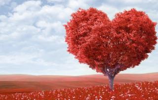 Amor ideal vs amor real